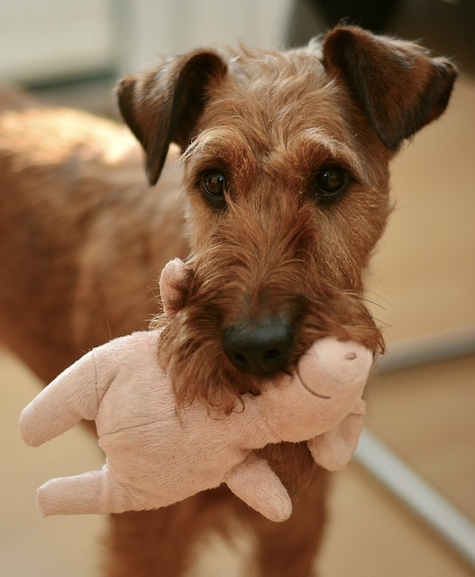 Toys-Your-Dog-Will-Actually-Play-With-A