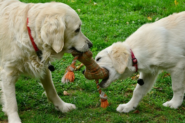 Toys-Your-Dog-Will-Actually-Play-With-F
