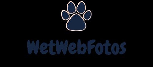 Wetwebfotos