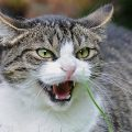 4-Things-that-cats-hate-the-most-f