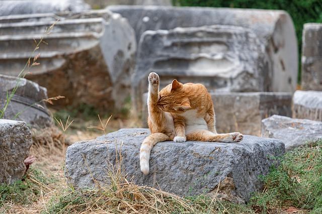 Natural-ways-to-treat-cat-fleas